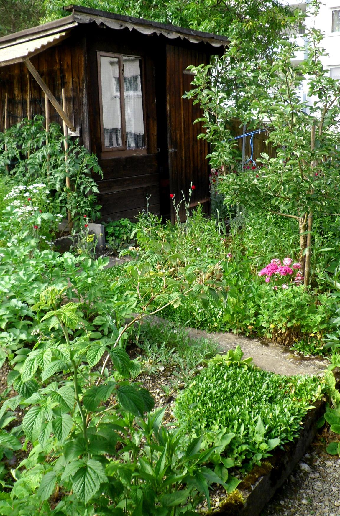 Selbstversorger-Garten im Juni