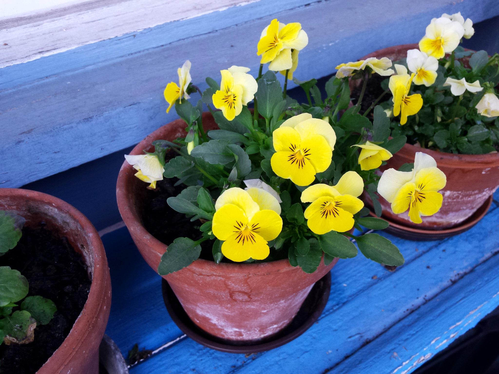 Arbeiten im Frühling für Selbstversorger- der März ist da!
